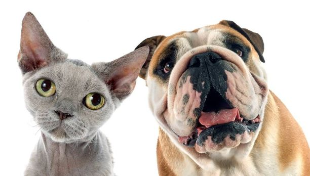 Kissasta ja koirasta voi tulla sairaita sohvaperunoita, jos niitä ei hoideta oikein.