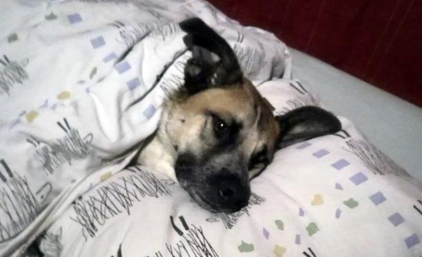 Poliisi ampui 3-vuotiaan Dobby-nimisen koiran Lahdessa.