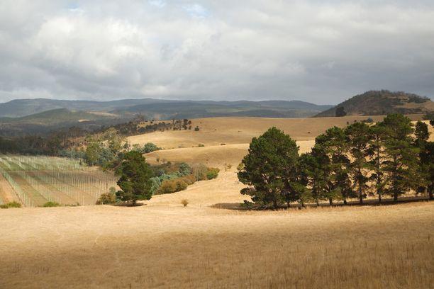 Sisarukset ovat joutuneet luopumaan maatilastaan Tasmaniassa, Australiassa. Kuvituskuva.