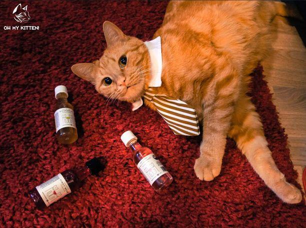 Amerikasta Suomeen rantautunut Pinot Meow-viini on tarkoitettu kissoille.