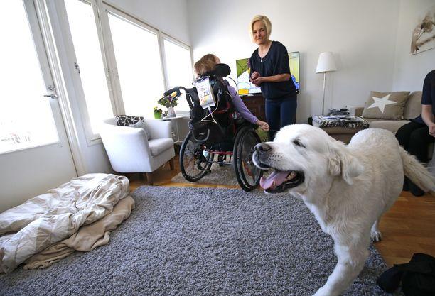 Koirat Aku (kuvassa) ja Snoopy piristävät Mari Rantasen perheen arkea.