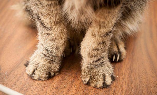 Hätääntyneet omistajat etsivät kissaansa muun muassa Facebook-ilmoituksin. Kuvituskuva.