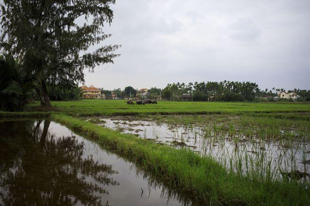 Vietnamissa vaihtelevat kuivuudet ja tulvat, mikä aiheuttaa ihmisten elinkeinoihin epävarmuutta.