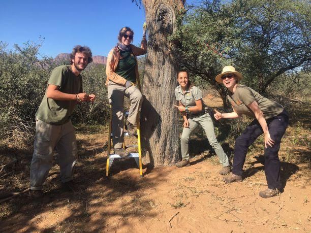 Ekomatkaajien Etelä-Afrikan kohteessa puita kiedotaan verkkoihin, jotta ne pysyvät turvassa norsuilta.