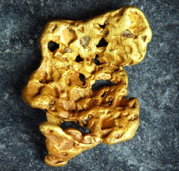 Tällainen kultahippu löytyi Tampereelta vuosituhannen alussa.
