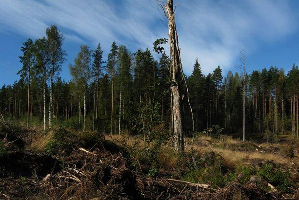 Metsä ei kuitenkaan voi olla kaikkea kaikille loputtomasti. EU:n asiantuntijaryhmä on jo kertaalleen palauttanut Suomen hiilinielulaskelmat epärealistisina. Kuvituskuva.