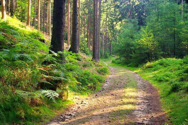 Toimistotyötä muistuttavien stressitilanteiden jälkeen luontoympäristön katselu tai siellä oleilu tai kävely rentouttaa fysiologisesti jo noin 4-7 minuutin kuluttua.