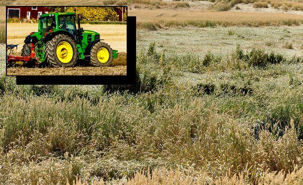 Sadesäiden takia myös puiduksi saatujen viljojen kohdallakin tilanne on huono. MTK:n mukaan kuivatuskustannukset kohoavat kaksinkertaiseksi normaalivuoteen verrattuna.