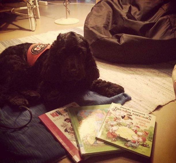 Lukukoirana auttava Jego. Lukukoiratuokiossa lapset saavat lukea kirjoja koirille.
