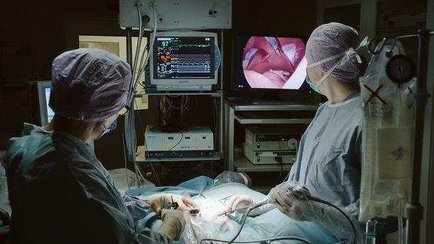 Eläinsairaalassa lemmikit saavat ensiluokkaista hoitoa.