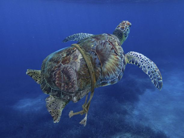 Esimerkiksi muovijäte on yksi suoraan merenalaisia ekosysteemejä uhkaavista ihmisen aiheuttamista häiriötekijöistä.