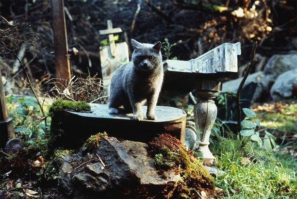Kuolleet kissat, nekin ovat melko selkäpiitä karmivaa katseltavaa!