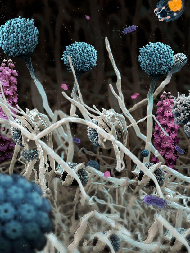 Merenalainen maisema? Ei, vaan kukkia, joiden ympärillä pölisee valtavasti suurennettuja viruspilviä.