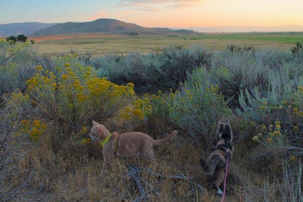 Venni ja Oiva ovat nuoresta iästä huolimatta jo kokeneita matkustajia ja vaeltajia. Kuva Kalifornian ja Nevadan rajalta.