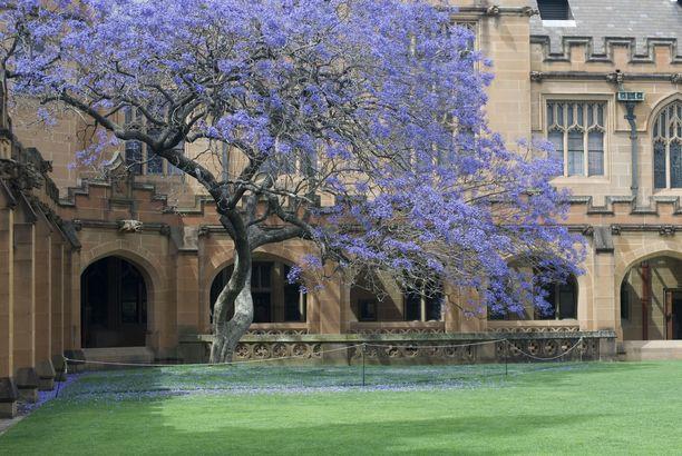 Sydneyn yliopiston kampus tarjoaa silmänruokaa.