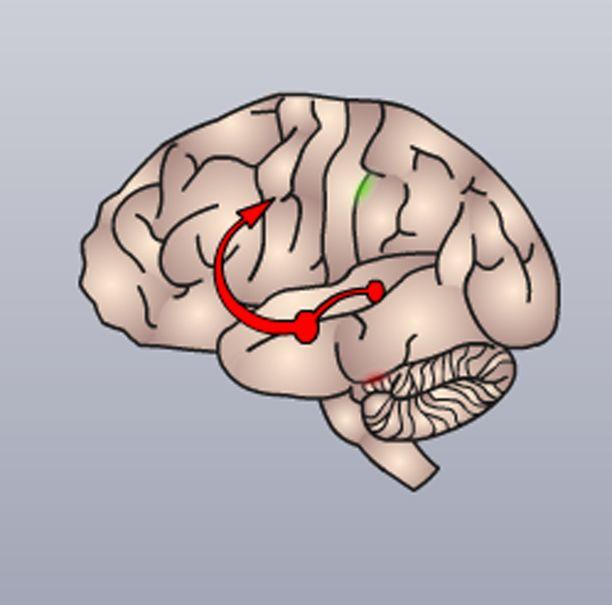 Dopamiinia ja adrenaliini välittävät jatkuvasti signaaleja, jotka saavat olon tuntumaan hyvältä, nautinnolliselta ja energiseltä.