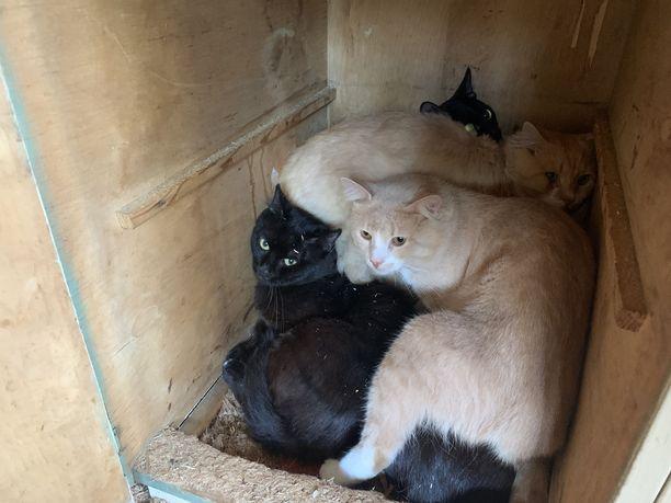 Nuoria kissoja oli kaikkiaan 38.