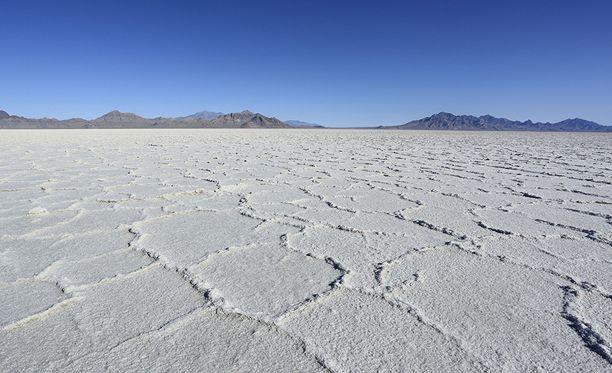 Utahin Salt Lake on meriapinoiden kotiympäristöä. Suolajärvi voi kuivua pitkiksi ajoiksi, mutta kun järvi taas täytyy vedestä, meriapinat kuoriutuvat.