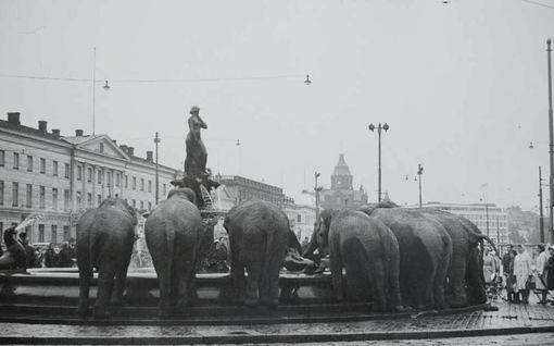 Häkellyttävän valokuvan arvoitus ratkesi? Taksikuski ikuisti norsut Helsingin keskustassa 60-luvulla