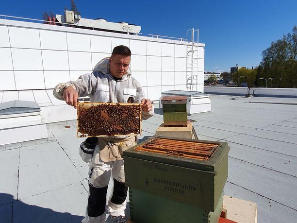 Teemu Aittamaa toivoo, että voisi joku päivä elättää itsensä hunajalla.