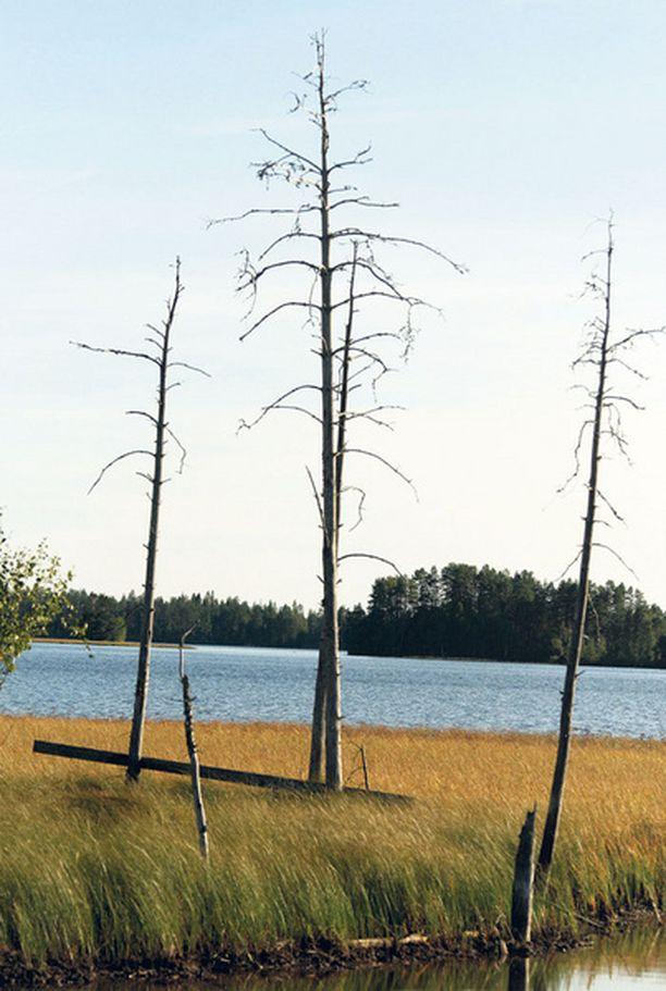 Suomen kansantalous on aikoinaan rakennettu puulla ja nyt perustukset heilahtelevat.