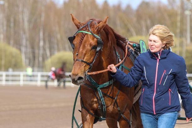 Lissun Eerikki ei ole vaihtamassa maisemaa kansainvälisestä kiinnostuksesta huolimatta. Kuvassa ori Erkon Pokaalin kunniakierroksella hoitajansa Minna Luukkosen kanssa.