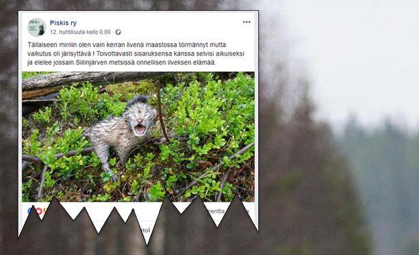 Tarkoitus oli auttaa kissanpentuja metsässä. Vikisevän äänen aiheuttivat kuitenkin ilvespennut.