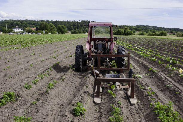 Monilla maatiloilla taloudellinen alamäki alkoi rajuna Venäjä-pakotteiden tultua voimaan elokuussa 2014. Kuvituskuva.