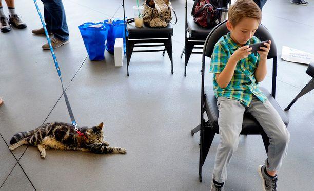 Tara hyökkäsi empimättä perheen pojan, nyt 6-vuotiaan Jeremy Triantafilon kimppuun käyneen koiran niskaan.
