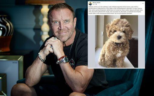 Renny Harlin etsii koiraa – lupaa löytäjälle roolin seuraavasta leffastaan
