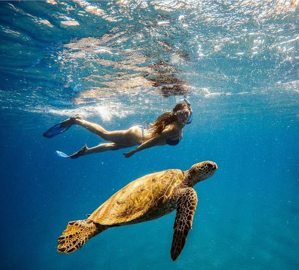 Uimahetki kilpikonnan kaverina.