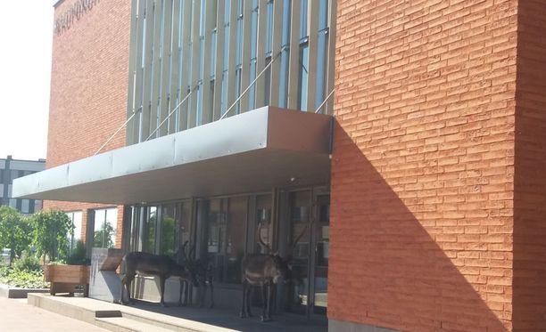 Porot tulivat viilentymään Kemijärven kaupungintalolle helteellä.