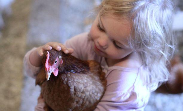 Tutkimuksen mukaan lapsuuden maatilaympäristö suojaa lapsia allergialta.
