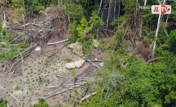 Amazonin sademetsästä löytyi entuudestaan täysin tuntematon ihmisheimo.