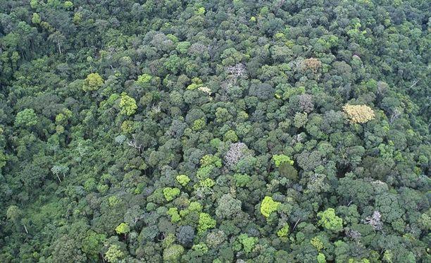 Amazonin sademetsän sisäosissa kukoisti jopa miljoonan ihmisen kulttuuri, josta ei ole aikaisemmin tiedetty mitään.