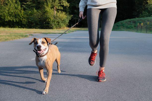 Koiranomistajien kannattaa kiinnittää huomiota lemmikkinsä syömiskäyttäytymiseen.