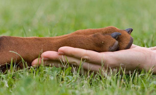 SEY toivoo lakimuutosta koirien parempien kasvatusolojen turvaamiseksi.