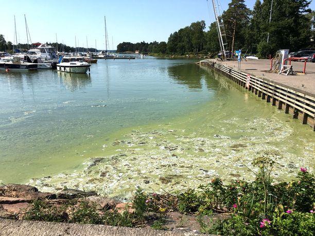 Suomenlahden sinilevätilanne on tänä kesänä poikkeuksellisen paha. Kuvassa leväpuuroa Haukilahden venesatamassa Espoossa.