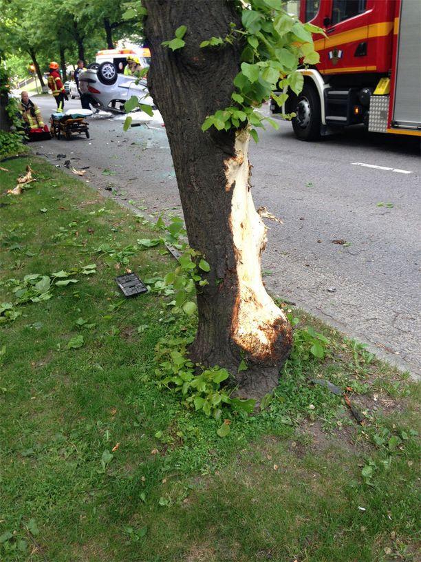 Puuhun jäi selvä jälki auton törmäyksestä.