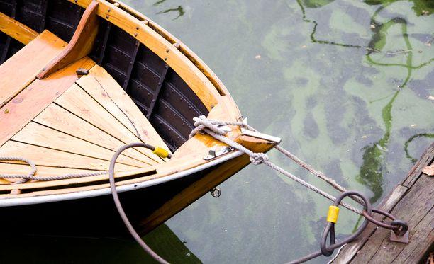 Sinilevä esiintyy useimmiten veden pinnalla kelluvina lauttoina.