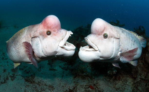 Jotkut kalat pystyvät vaihtamaan sukupuoltaan.