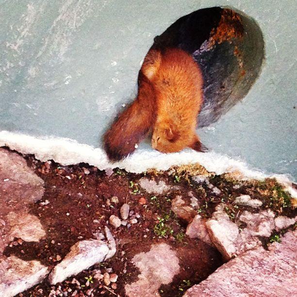 Orava synnyttää Laajasalossa koulun seinällä olevassa kolossa.