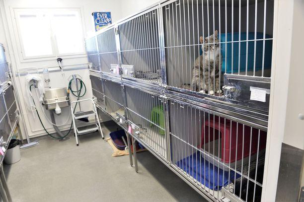 Tänne saakka ei kovan onnen kissa koskaan päätynyt. Kuva on Viikin löytöeläintalosta, joka  sijaitsee yliopistollisen eläinsairaalan vieressä.