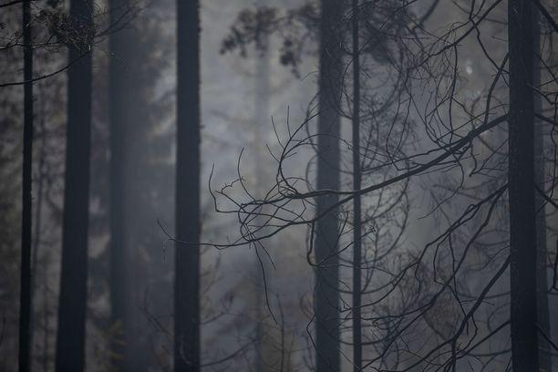 Pyhärannassa viime kesänä riehuneet maastopalot aiheuttivat laajat tuhot Varsinais-Suomessa.