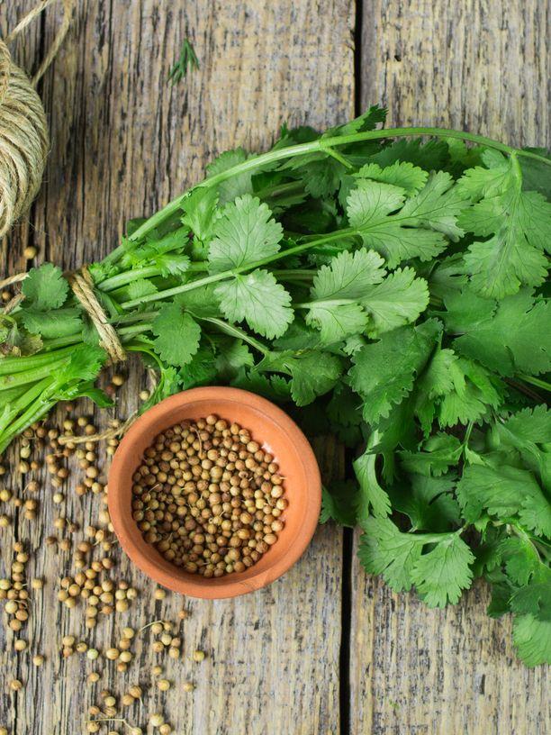 Tuoretta korianteria käytetään mausteen, ja myös korianterin kuivatut siemenet käyvät maustamiseen.