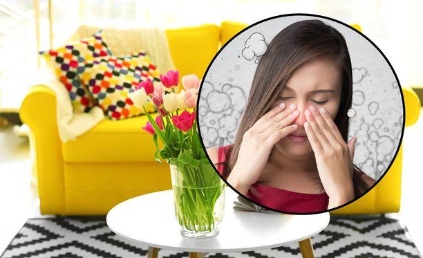 Pehmustettu uusi huonekalu voi haista jopa kuukausia ja osaltaan aiheuttaa esimerkiksi päänsärkyä ja pahoinvointia.