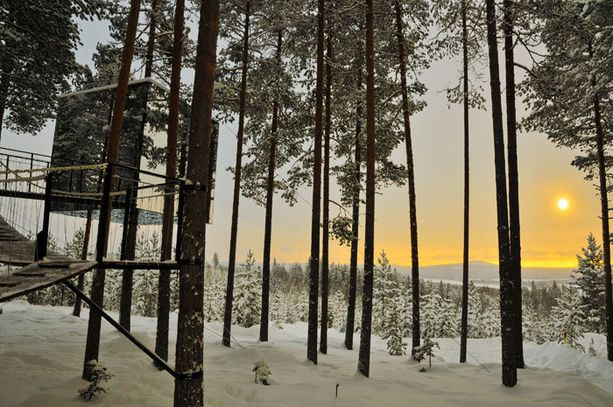 Tree Hotelin huonessa voi ihastella metsää.