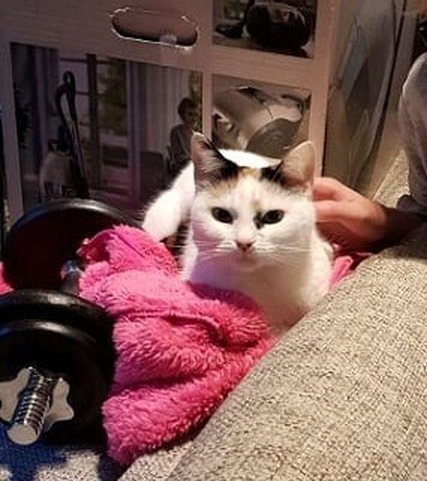 Kitty-kissa herätti talon ihmiset ennen kuin tulipalo ehti levitä kuistilta pidemmälle.