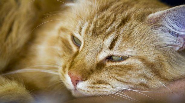 Eläinsuojeluyhdistys pitää tapausta kammottavana. Kuvan kissa ei liity tapaukseen.