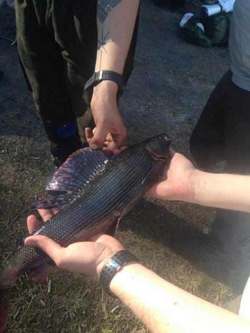 Iso harjus on yksi Hossan halutuimmista kaloista.
